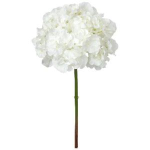 Hortensie albă